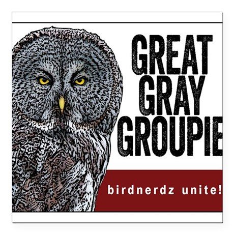 "Great Gray Groupie Square Car Magnet 3"" x 3"""