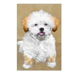 Lhasa Apso Postcards (Package of 8)