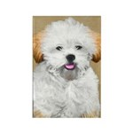 Lhasa Apso Rectangle Magnet (10 pack)