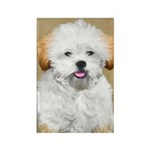 Lhasa Apso Rectangle Magnet (100 pack)