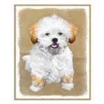 Lhasa Apso Small Poster