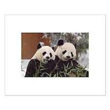 Pandas Eating Small Poster