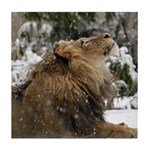 Lion in Snow Tile Coaster