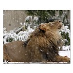 Lion in Snow Small Poster