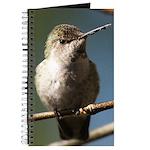 Annas Hummingbird Journal