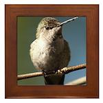 Annas Hummingbird Framed Tile