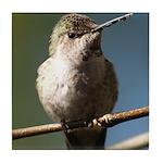 Annas Hummingbird Tile Coaster