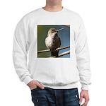 Annas Hummingbird Sweatshirt
