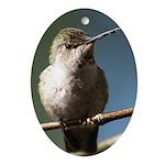 Annas Hummingbird Ornament (Oval)