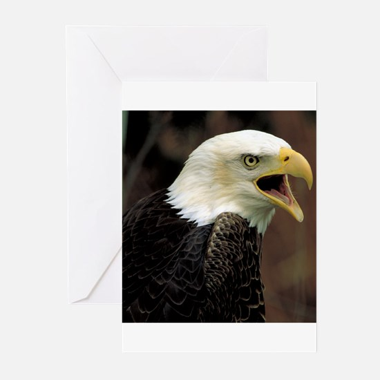 Voiceful Bald Eagle Greeting Cards (Pk of 20)