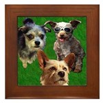 Buster Lucky Chewie Square Framed Tile