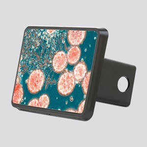 Stem cells, light micrograph - Hitch Cover