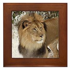 Lion Framed Tile