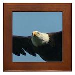 Eye of the Eagle Framed Tile