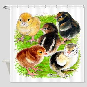 Five Chicks Shower Curtain