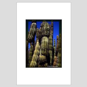 Saguaro Large Poster