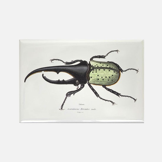 Scarab Hercules Beetle Rectangle Magnet