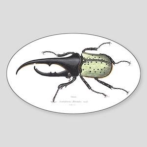 Scarab Hercules Beetle Oval Sticker