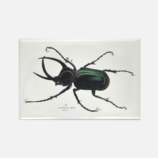 Scarab Atlas Beetle Rectangle Magnet