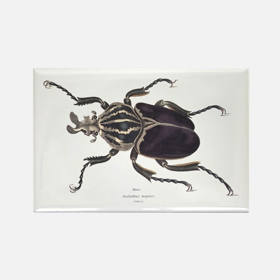 Goliath Beetle Rectangle Magnet