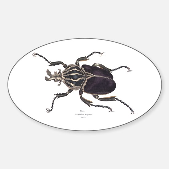 Goliath Beetle Oval Decal