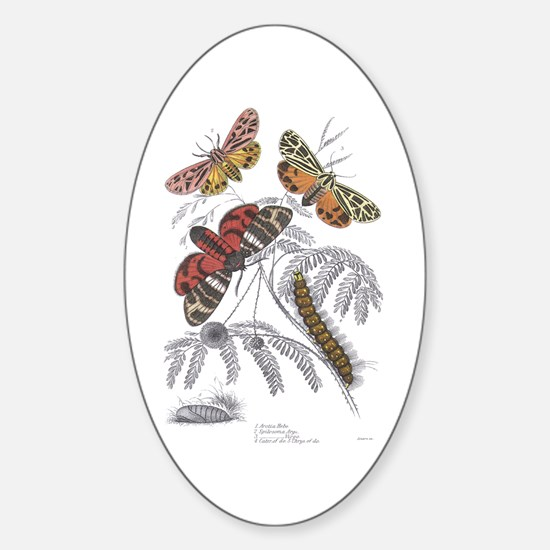 Moth Insects Oval Decal
