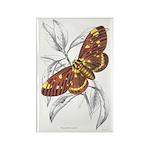 Dorycampa Regalis Moth Rectangle Magnet (10 pack)