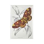 Dorycampa Regalis Moth Rectangle Magnet