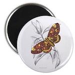 Dorycampa Regalis Moth Magnet