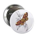 Dorycampa Regalis Moth Button