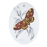 Dorycampa Regalis Moth Oval Ornament