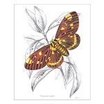 Dorycampa Regalis Moth Small Poster