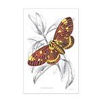 Dorycampa Regalis Moth Mini Poster Print
