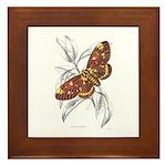 Dorycampa Regalis Moth Framed Tile