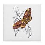 Dorycampa Regalis Moth Tile Coaster