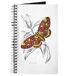 Dorycampa Regalis Moth Journal