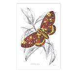 Dorycampa Regalis Moth Postcards (Package of 8)