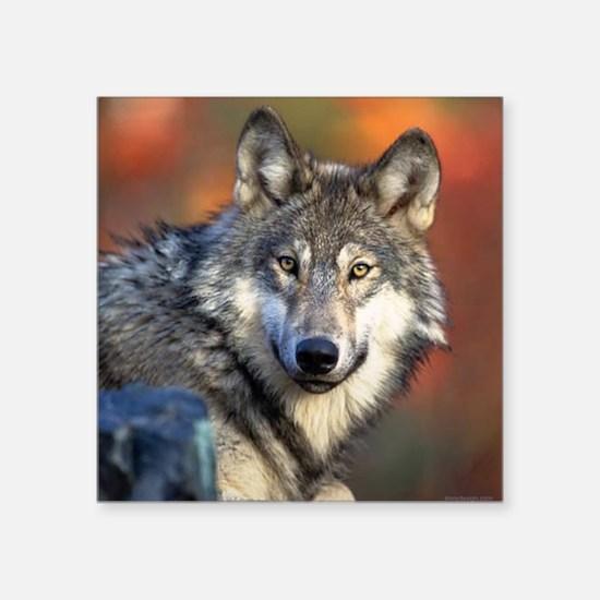 "Wolf Photograph Square Sticker 3"" x 3"""