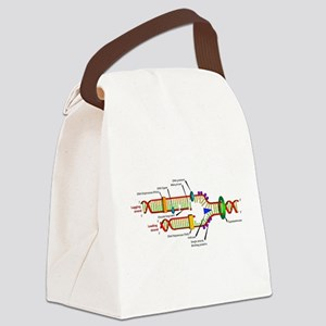 DNA Synthesis Canvas Lunch Bag