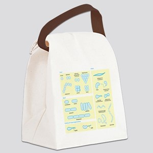 Morphology Canvas Lunch Bag