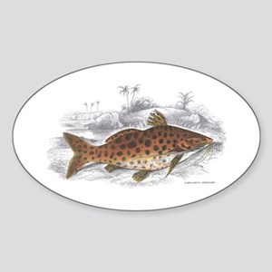 Catfish Fish Oval Sticker