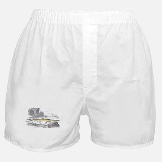Swordfish Fish Boxer Shorts