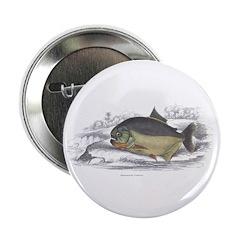 Serrasalmo Piranha Fish 2.25