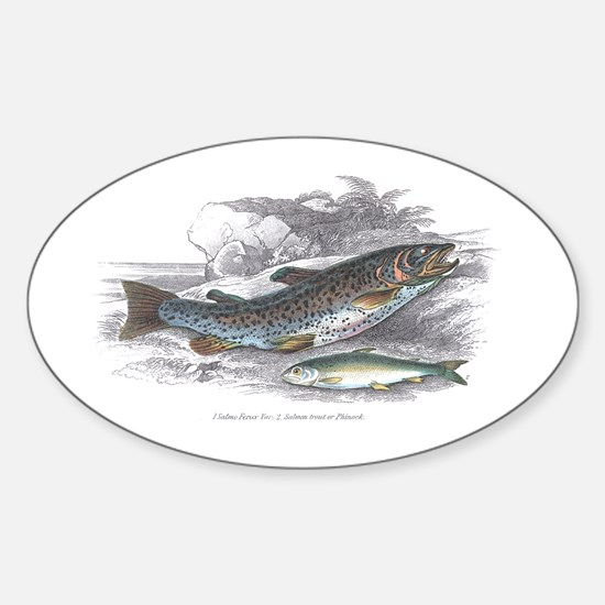 Trout Fish Oval Decal
