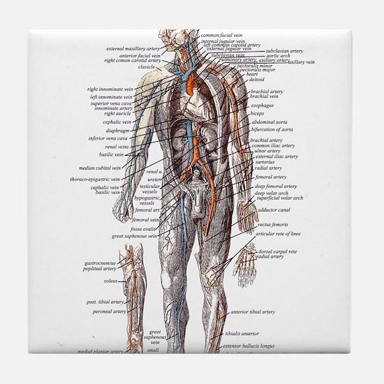 Anatomy of the Human Body Tile Coaster