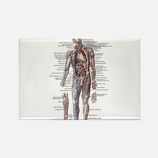 Anatomy of the Human Body Rectangle Magnet