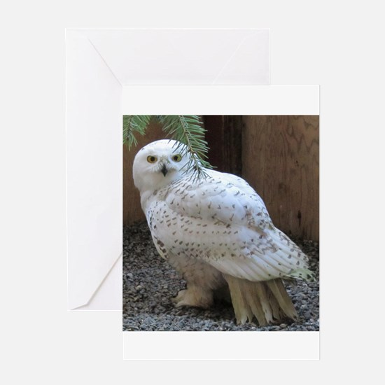 Snowy Owl Full Greeting Cards