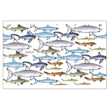 School of Sharks 1 Large Poster