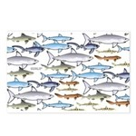 School of Sharks 1 Postcards (Package of 8)