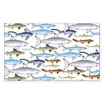 School of Sharks 1 Sticker (Rectangle)